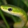 La PN - dernier message par serpentpn